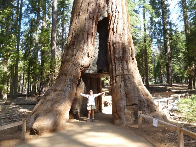 Tunnel-Tree-Mariposa-Grove-Linda-Ballou-768x576